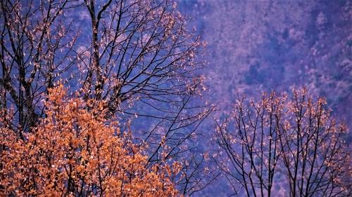 Χειμωνιάτικο τοπίο δέντρα